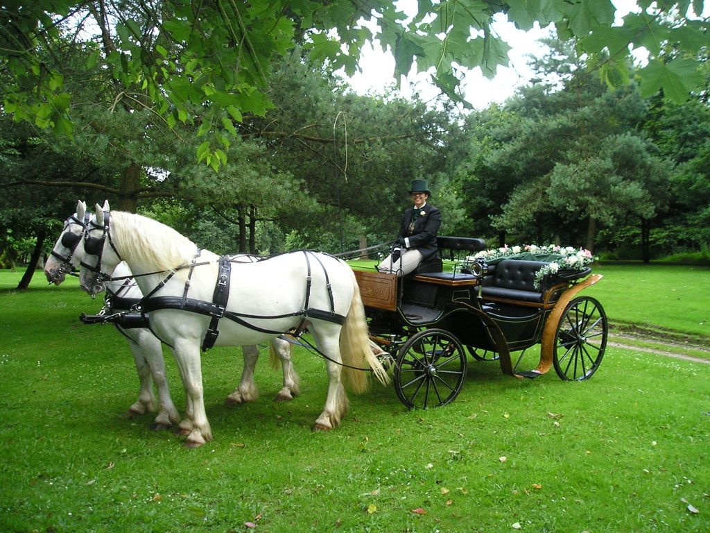 Wedding horse and carraige