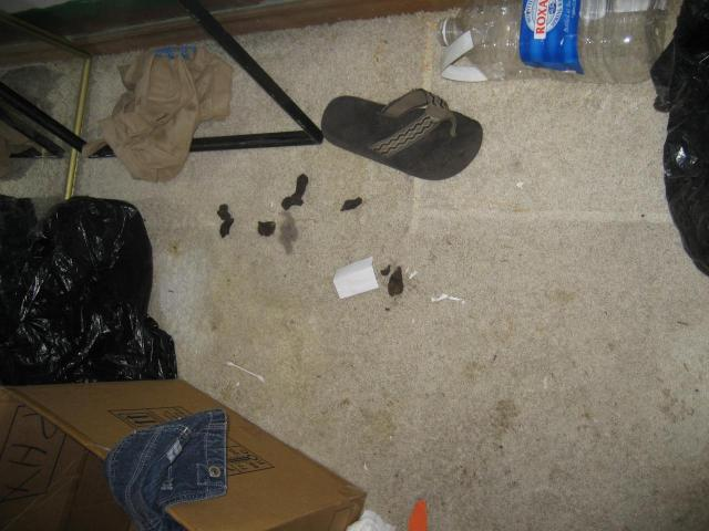 Messiest homes in the world