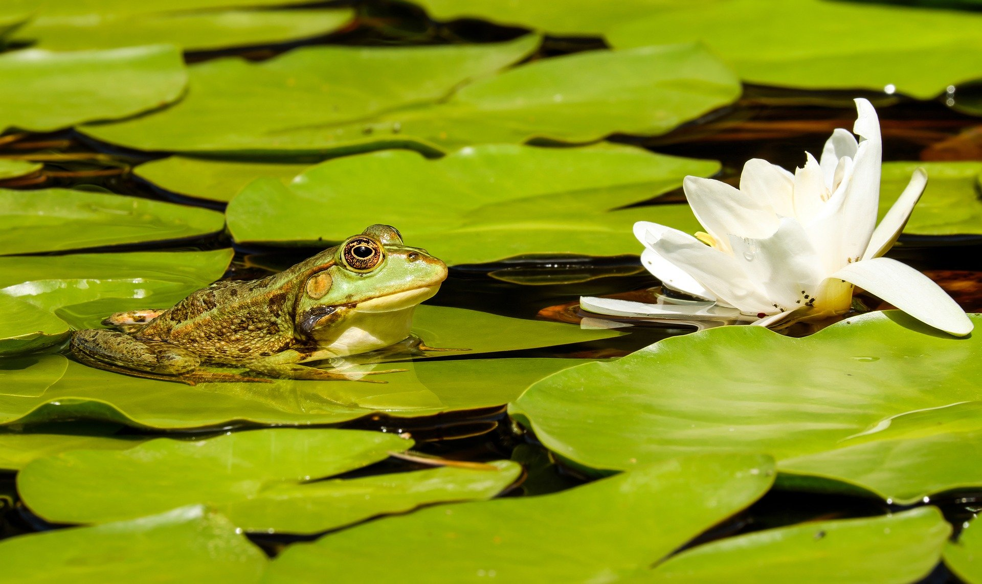 Your pond questions answered
